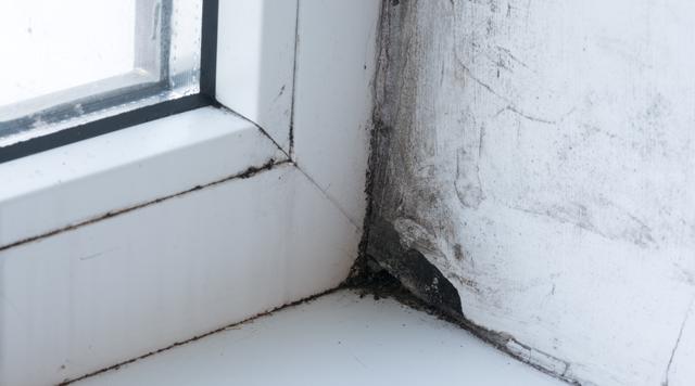 Har du fugt og skimmel i dine vægge?
